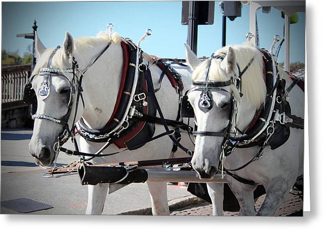 Percheron Draft Horses Greeting Card by Cynthia Guinn