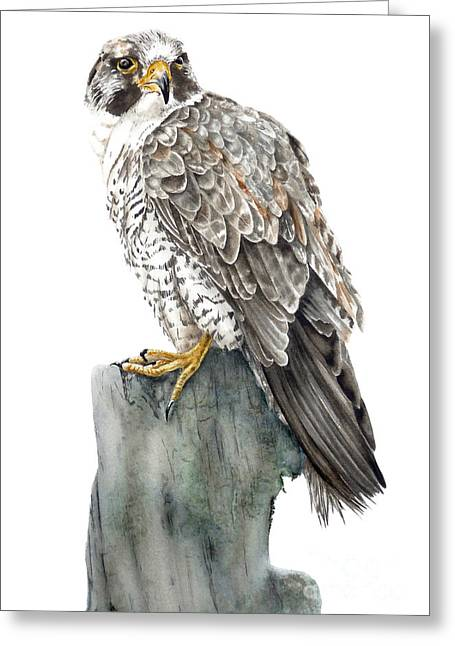 Peregrine Falcon Greeting Card by Marie Burke