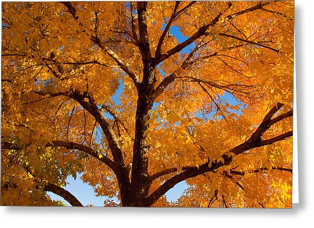 Lightning Gifts Greeting Cards - Perfect Autumn Day with Blue Skies Greeting Card by James BO  Insogna