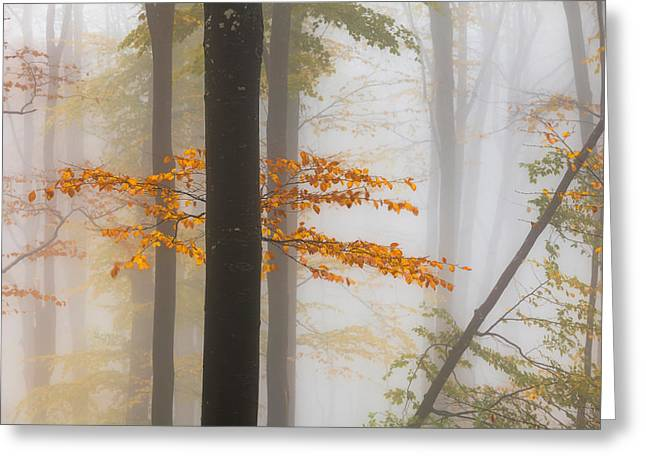 Perfect Forest Greeting Card by Evgeni Dinev