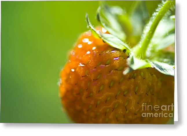 Culinary Greeting Cards - Perfect Fruit of Summer Greeting Card by Heiko Koehrer-Wagner