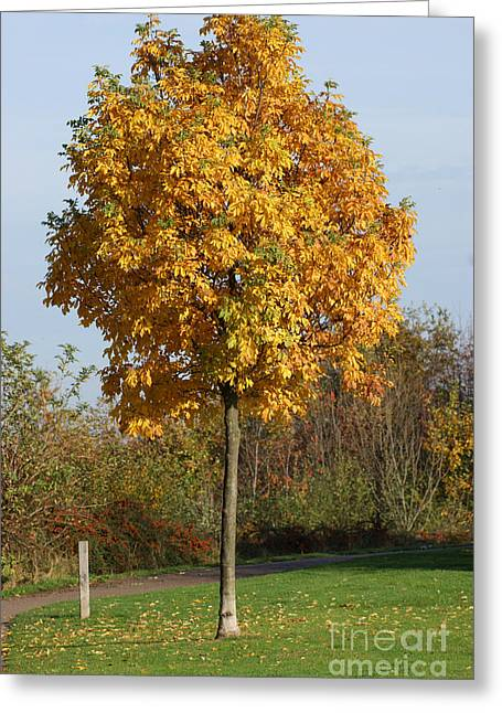 Autumn Art Greeting Cards - Perfect little tree Greeting Card by Carol Lynch