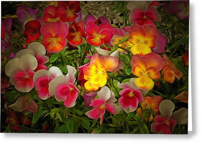 Recently Sold -  - Berry Greeting Cards - Radiance Pansies Greeting Card by Dorothy Berry-Lound