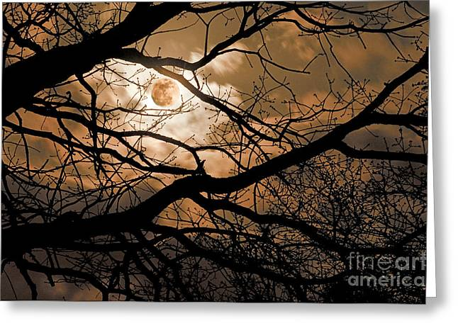Tamyra Ayles Greeting Cards - Perigee Moon in the Trees Greeting Card by Tamyra Ayles