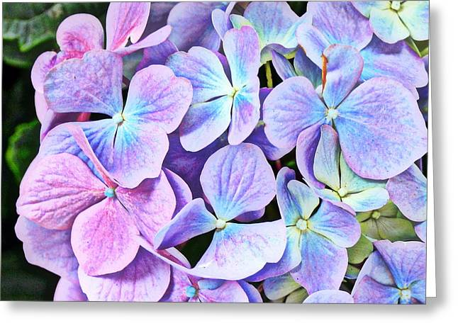 Periwinkle Blue And Pinkish Purple Hydrangeas Greeting Card by Carla Parris