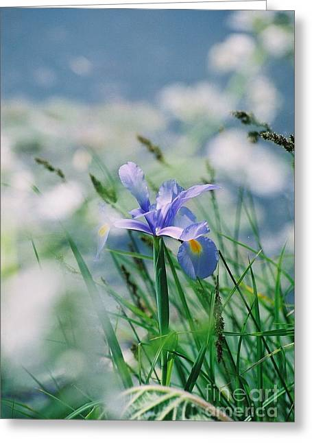 Periwinkle Iris Greeting Card by Nadine Rippelmeyer