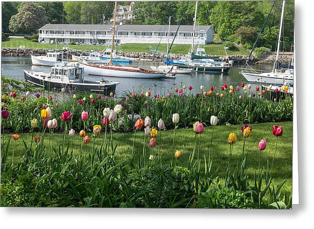 Maine Spring Greeting Cards - Perkins Cove Tulips Greeting Card by Joseph Smith