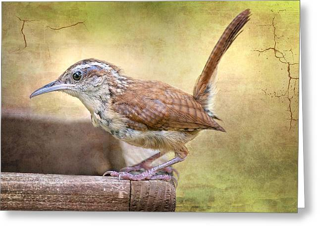 Wren Greeting Cards - Perky Little Wren Greeting Card by Bonnie Barry