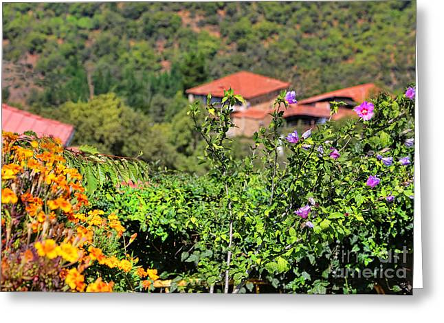Mountain Valley Greeting Cards - Perrozo-155A0981 Greeting Card by Diana Sainz
