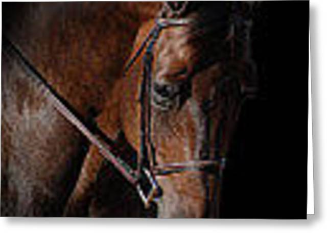 The Horse Greeting Cards - Perry Corrells Bay Greeting Card by Perry Correll