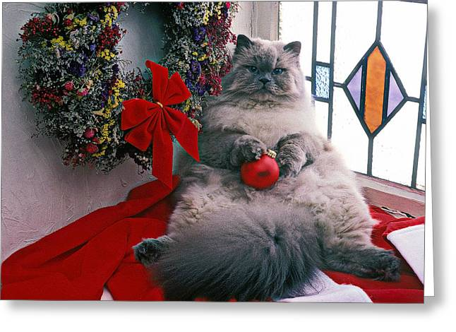 Fur Balls Greeting Cards - Persian cat with Christmas ball Greeting Card by Garry Gay
