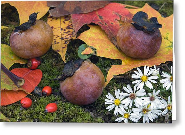 Persimmons - D009738 Greeting Card by Daniel Dempster