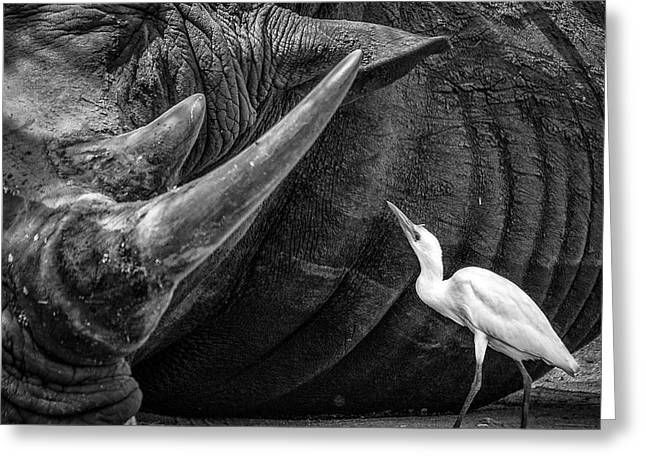 Rhinos Greeting Cards - Personal Advisor Greeting Card by Giovanni Casini