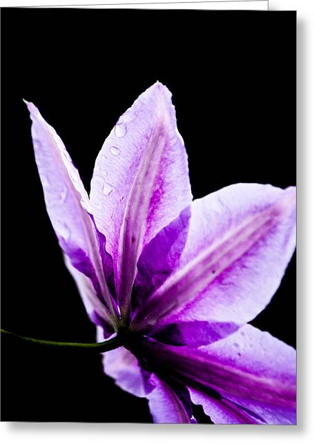 Pinks And Purple Petals Photographs Greeting Cards - Perspective Greeting Card by Shelby  Young