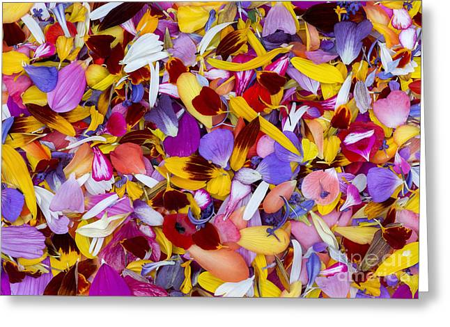 Shades Of Red Greeting Cards - Petalmania Greeting Card by Tim Gainey
