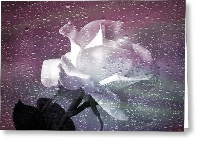 Rain Drop Greeting Cards - Petals and Drops Greeting Card by Julie Palencia