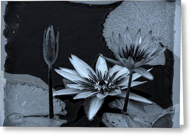 Pinks And Purple Petals Greeting Cards - Petals Floating on Water BW Greeting Card by Ella Kaye Dickey
