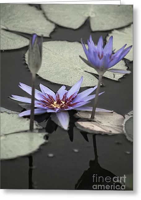 Purple Abstract Greeting Cards - Petals Floating on Water Greeting Card by Ella Kaye Dickey