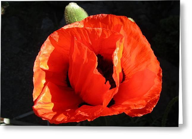 Capsule Greeting Cards - Petals in Orange Greeting Card by Rosita Larsson