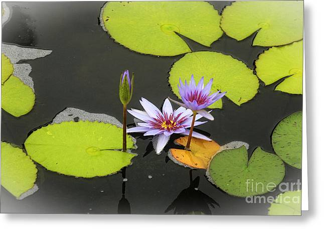 Flower Blossom Greeting Cards - Petals on Water Greeting Card by Ella Kaye Dickey