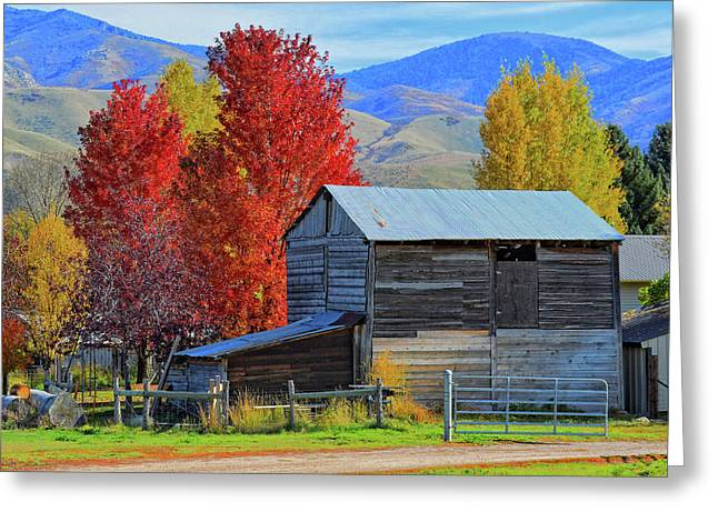 Peterson Greeting Cards - Peterson Barn in Autumn Greeting Card by David King