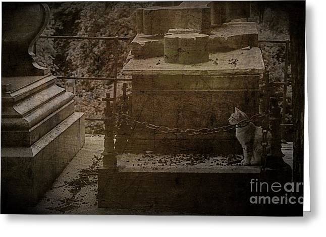 Paris Cemetery Cats Greeting Cards - Petit chat cimetiere du Pere-Lachaise Greeting Card by Louise Fahy