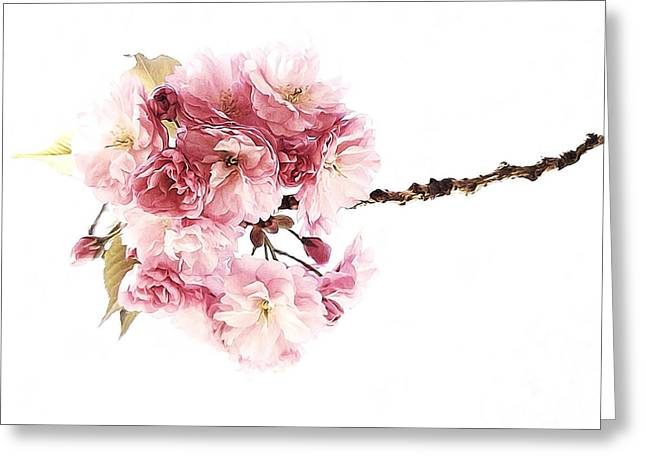 Prospects Greeting Cards - Petite Pink Greeting Card by Natasha Marco