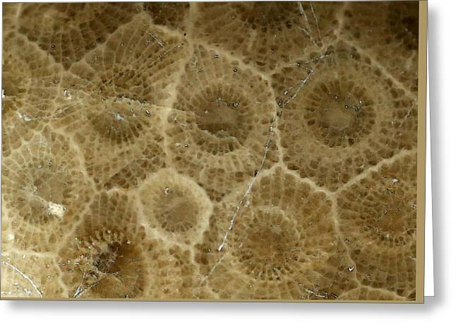 Geology Photographs Greeting Cards - Petoskey Stone 3 Greeting Card by Mary Bedy