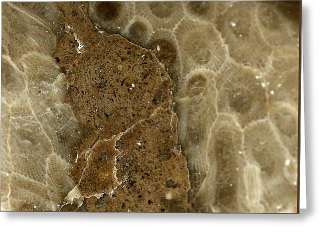 Geology Photographs Greeting Cards - Petoskey Stone with Sediment Inclusions Greeting Card by Mary Bedy