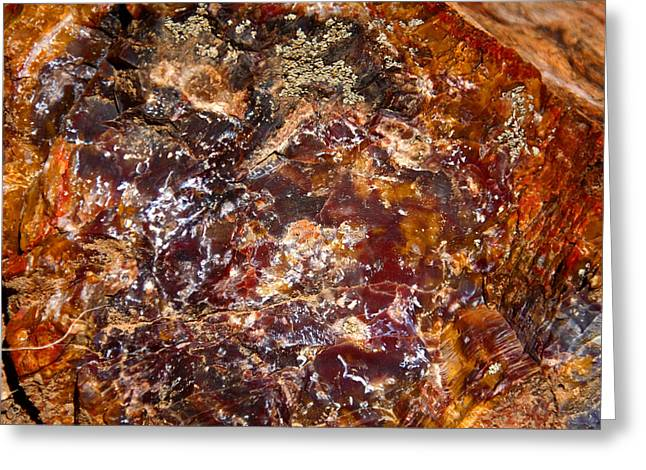 Petrified Greeting Cards - Petrified Colours Greeting Card by Aidan Moran