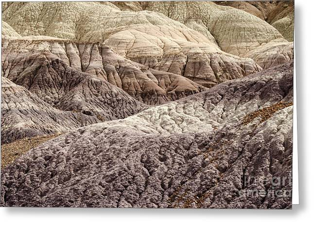 Petrified Forest National Park 2 Greeting Card by Bob Christopher