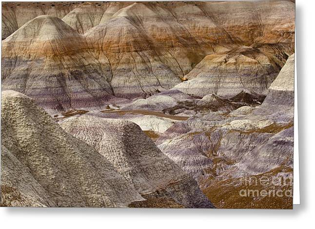 Petrified Forest National Park 4 Greeting Card by Bob Christopher