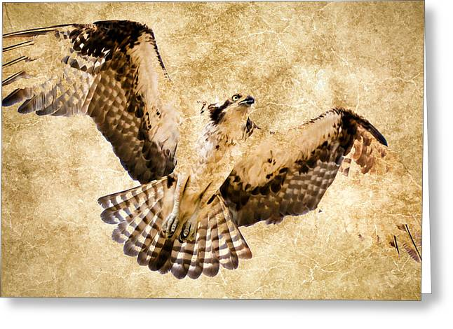 Soaring Falcon Greeting Cards - Fossilized Osprey In Flight Greeting Card by Athena Mckinzie