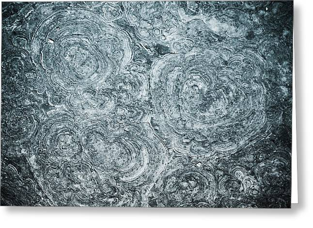 (c) 2010 Photographs Greeting Cards - Petrified Sea Floor Greeting Card by Ryan Kelly