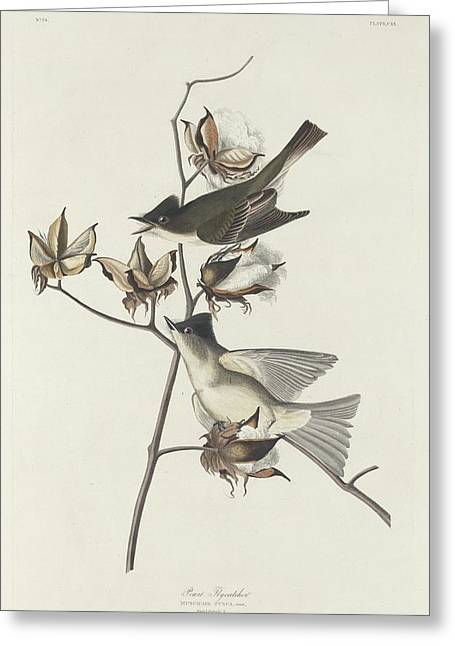 Small Bird Greeting Cards - Pewit Flycatcher Greeting Card by John James Audubon