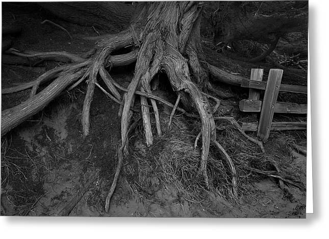 Pfeiffer Beach Iv Bw Greeting Card by David Gordon