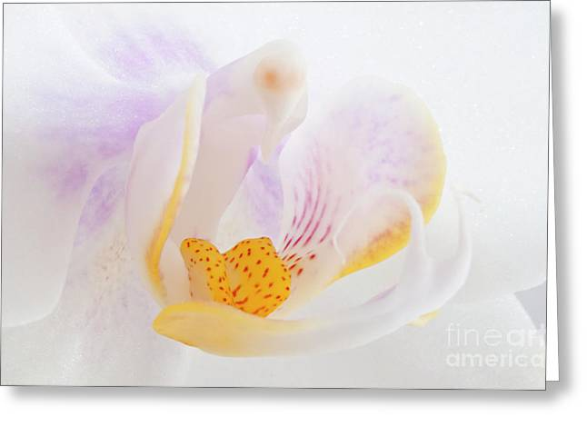 Angelini Greeting Cards - Phalenopsis II visit www.AngeliniPhoto.com for more Greeting Card by Mary Angelini