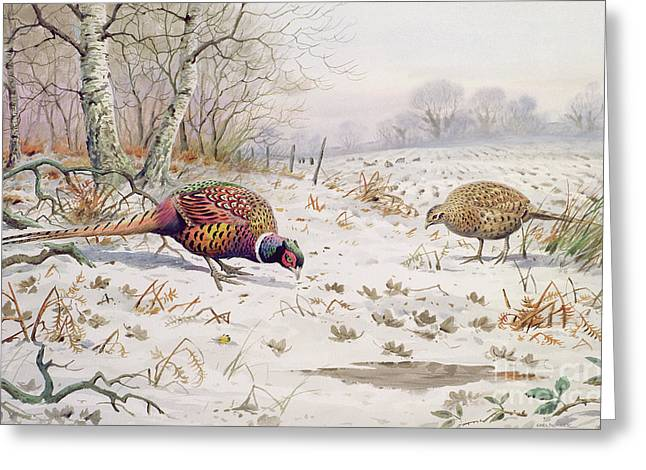 Pheasant And Partridge Eating  Greeting Card by Carl Donner