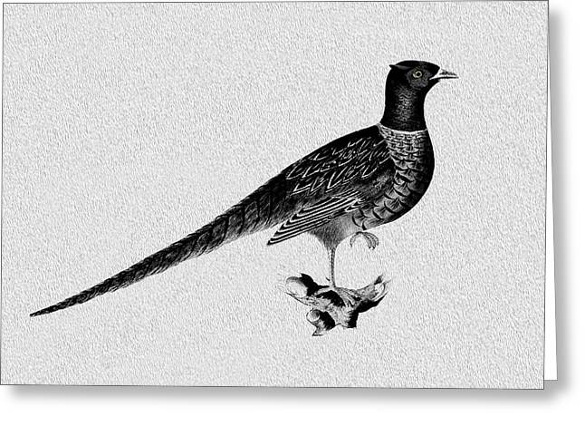 Pheasant Greeting Card by Mark Rogan