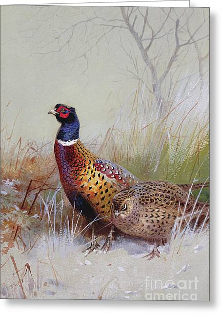 Pheasants In The Snow Greeting Card by Archibald Thorburn