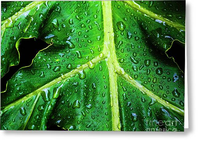 Philodendron Greeting Cards - Philodendron Rain Greeting Card by Scott Pellegrin