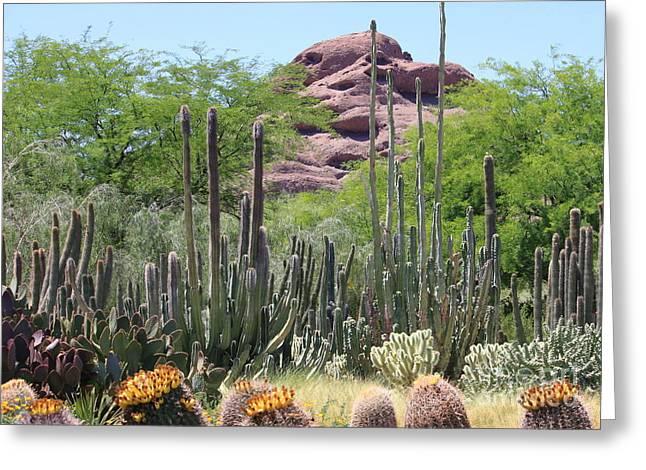 Phoenix Botanical Garden Greeting Card by Carol Groenen