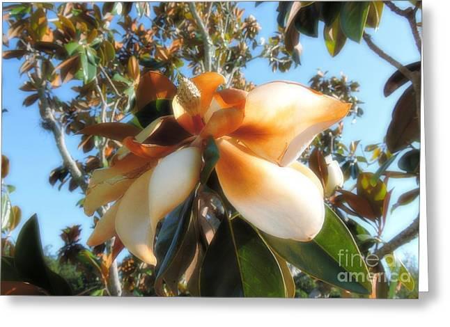 Stigma Greeting Cards - Phoenix Rising Greeting Card by Beth Williams