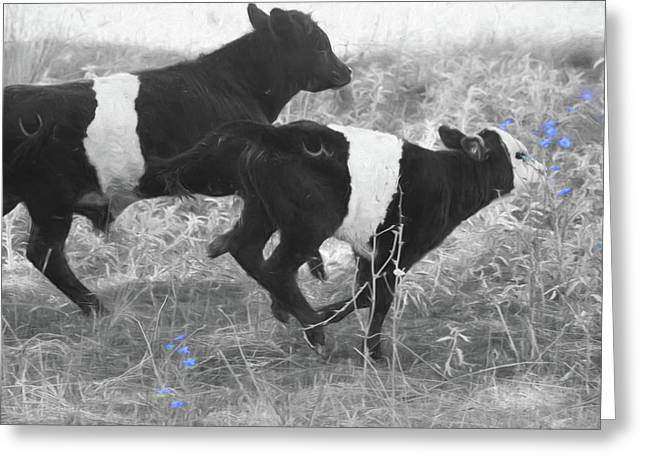 Photo Finish Greeting Card by Donna Kennedy