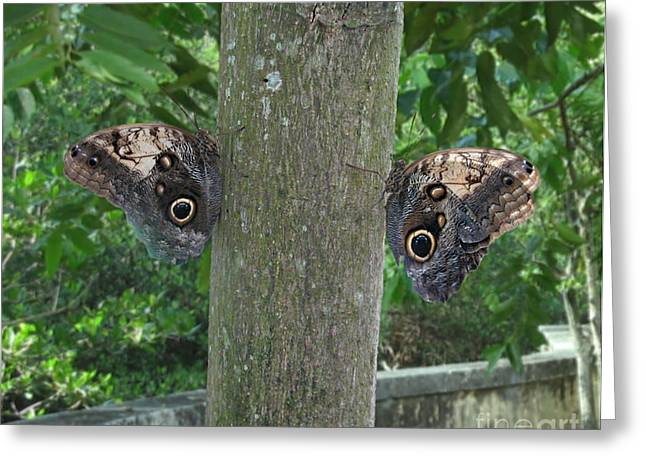 Photography Of Butterfly Symmetry Greeting Card by Mario  Perez