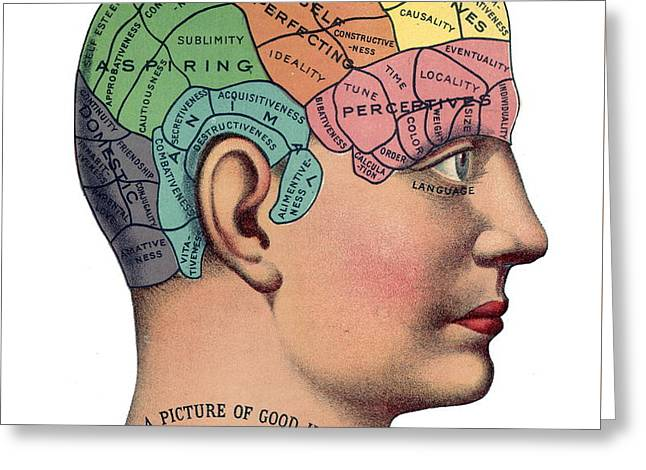 Phrenological Chart Greeting Card by American School