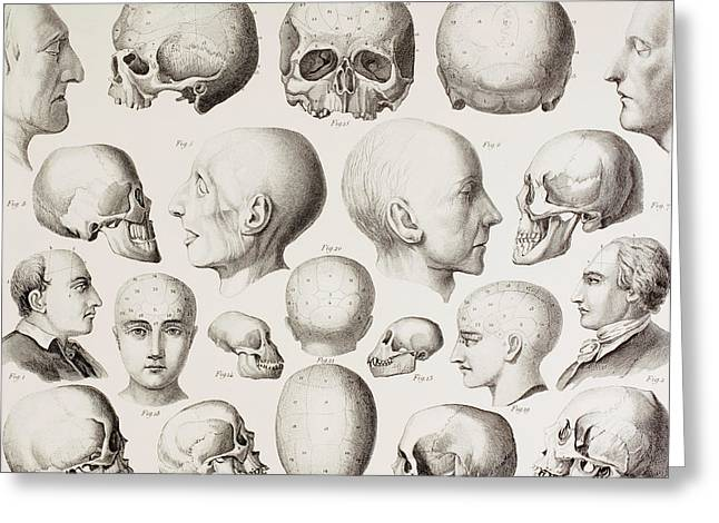 Pen And Ink Drawing Greeting Cards - Phrenological illustration Greeting Card by English School