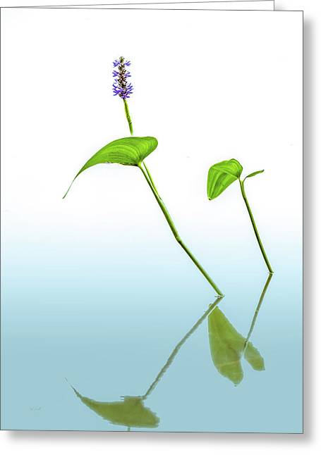 Pickerelweed In The Mist Greeting Card by Bob Orsillo