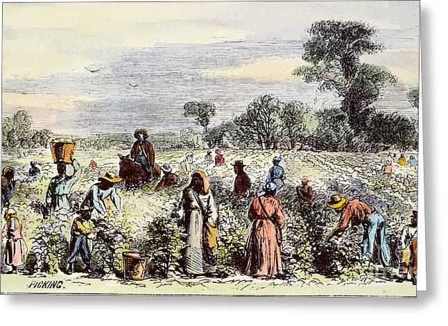 1867 Greeting Cards - Picking Cotton, 1867 Greeting Card by Granger