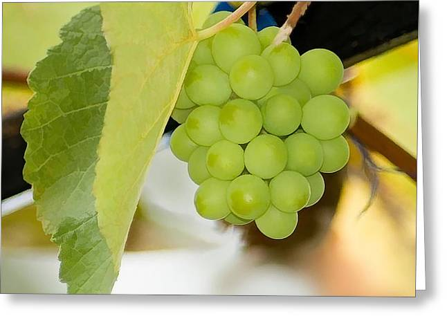 Picture Of Ripe White Grape Greeting Card by Lanjee Chee